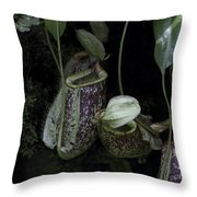 Pitcher Plant Inside The National Orchid Garden In Singapore Throw Pillow