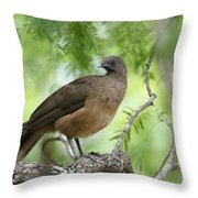 Plain Chachalaca  Throw Pillow
