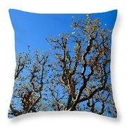 Plane Tree In Autumn Throw Pillow
