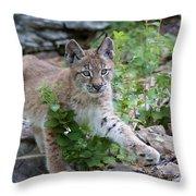 Playful Afternoon Throw Pillow