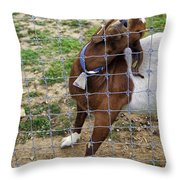 Please Exonerate Me 2 - Billy Goat Throw Pillow