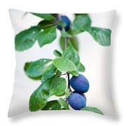 Plum Tree Throw Pillow