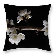 Plum Tree Spring Blossum Throw Pillow