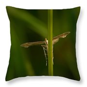 Plume Moth Throw Pillow