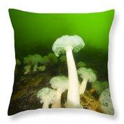 Plumose Sea Anemones, Alaska, Usa Throw Pillow