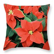 Poinsettia Varieties Throw Pillow