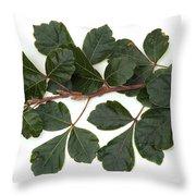 Poison Oak Branch Throw Pillow
