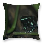 Poisonous Green Frog 04 Throw Pillow