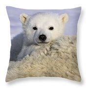 Polar Bear Cub Canada Throw Pillow