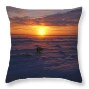 Polar Bear In Arctic Sunset Throw Pillow