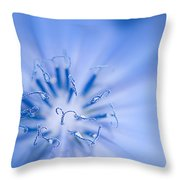 Pollination  Blue Chicory Throw Pillow