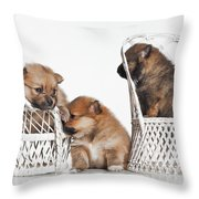 Pomeranian 3 Throw Pillow by Everet Regal