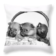 Pomeranian Throw Pillow by Everet Regal