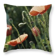 Poppies In A Field In Provence Throw Pillow