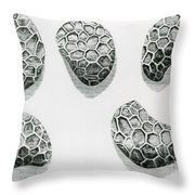 Poppy Seeds Engraving-1665 Throw Pillow