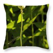 Poppyseed Bug Throw Pillow