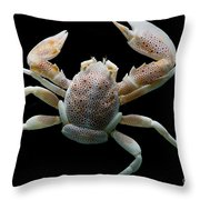 Porcelain Crab Throw Pillow