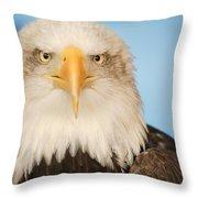 Portrait Of A Bald Eagle Throw Pillow