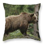 Portrait Of A Brown Bear Throw Pillow