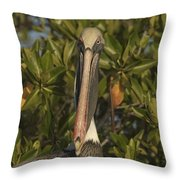 Portrait Of A Brown Pelican Pelecanus Throw Pillow