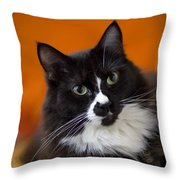 Portrait Of A Cat Throw Pillow