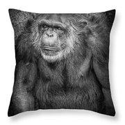 Portrait Of A Chimpanzee Throw Pillow