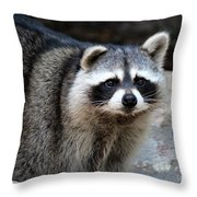 Portrait Of A Masked Bandit Throw Pillow
