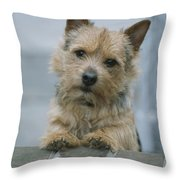 Portrait Of A Norwich Terrier Throw Pillow