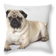 Portrait Of A Pug Dog Throw Pillow