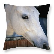 Portrait Of A White Horse Looking Throw Pillow