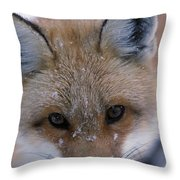 Portrait Of Adult Red Fox Throw Pillow