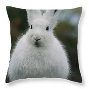 Portrait Of An Arctic Hare Throw Pillow