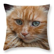 Portrait Of An Orange Kitty Throw Pillow