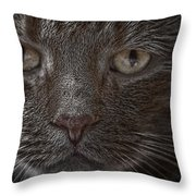 Portrait Of Cutio The Cat Throw Pillow