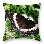 Posing Butterfly Throw Pillow