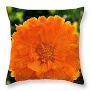 Pot Marigold  Throw Pillow