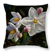 Potato Vine Blossom Throw Pillow