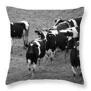 Pourquoi Pas Les Vache Throw Pillow