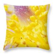 Prairie Crocus Anemone Patens Throw Pillow