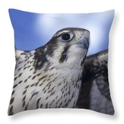Prairie Falcon In Flight Throw Pillow