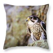 Prairie Falcon On Rock Ledge Throw Pillow