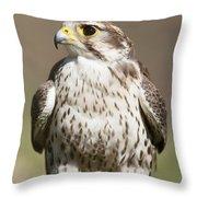 Prairie Falcon Perches On The Ground Throw Pillow
