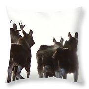 Prairie Moose Saskatchewan Throw Pillow