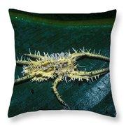 Predatory Tropical Fungus Throw Pillow