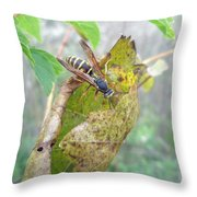 Predatory Wasp Hunts Spider Throw Pillow