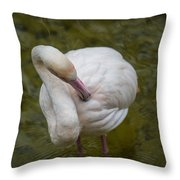 Preening. Throw Pillow