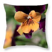 Prettiest Pansy Throw Pillow
