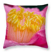 Pretty In Pink Throw Pillow by Rich Franco
