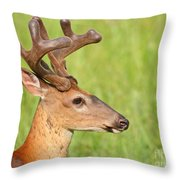 Pretty In Velvet Throw Pillow