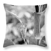 Pretty Pulpit Throw Pillow
